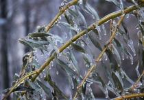 Конец нынешней недели пройдет в Москве на фоне настоящей осенней непогоды со снегом, ледяным дождем и сильным, почти шквалистым ветром
