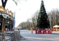 Мэрия назвала места установки новогодних елок в Рязани