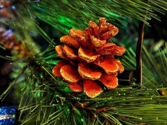 Аукцион на право торговли новогодними елками объявила мэрия Петрозаводска