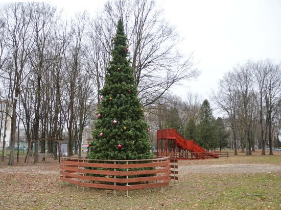 В Твери установили первую новогоднюю ель