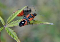Какие насекомые самые стойкие в Астраханской области