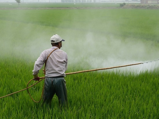Российские ученые нашли замену пестицидам для защиты растений