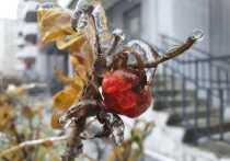 Ледяной дождь, превративший в прозрачные статуи деревья и машины по всей стране, - слишком непредсказуемое явление, чтобы можно было с точностью сказать, что он не повторится