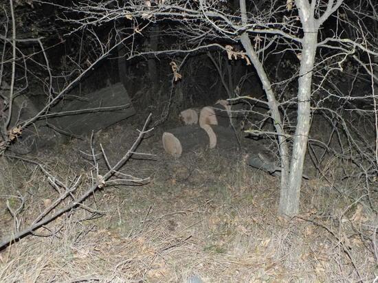 На Ставрополье следствие проверяет трагедию с деревом-убийцей