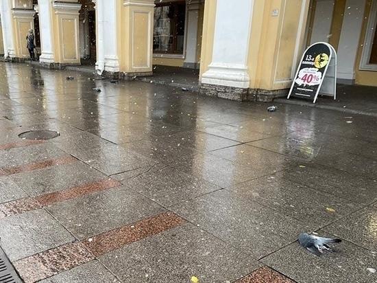 Смольный будет расследовать гибель голубей у Гостиного двора