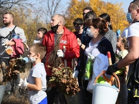 Волгоградцы высадили 3,5 тысячи деревьев в Волго-Ахтубинской пойме