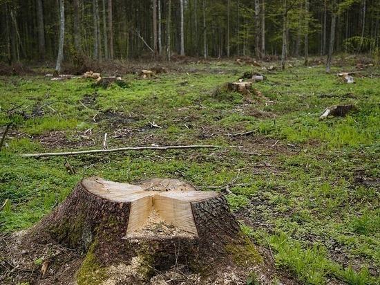 В Алексеевском районе зарегистрировано незаконное уничтожение деревьев