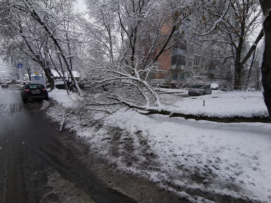 В Калуге от тяжести снега попадали деревья
