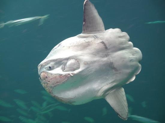 В Великобритании на берег выбросило тропическую рыбу