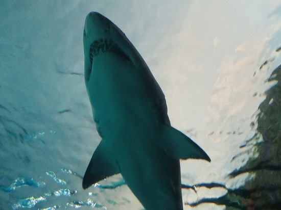 У побережья Австралии мужчина погиб от зубов акулы