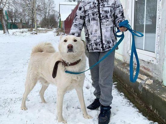 В Тверской области хозяин хотел застрелить пса, не желавшего охотиться