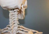 Сторонники какого питания имеют повышенный риск перелома костей