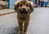 В Шурышкарском районе после вмешательства прокурора построят приют для животных