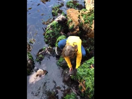 Одиннадцатилетняя девочка голыми руками спасла акулу