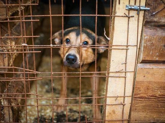 До 10 декабря в Приангарье должны разработать концепцию госприютов для животных
