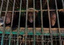 В минувшие выходные волонтеры оборудовали берлоги для медведей в питомнике «К-9»