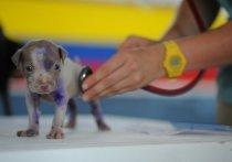 Московские ветеринары назвали самые распространенные болезни домашних питомцев