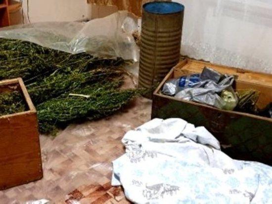У жителя Усть-Кутского района изъяли 17 кг конопли