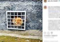 Беспородный кот из поселка Колычево Можайского городского округа Подмосковья, которого без конца подкармливали местные жители, попал в историю, уже когда-то описанную в мультике про Винни Пуха