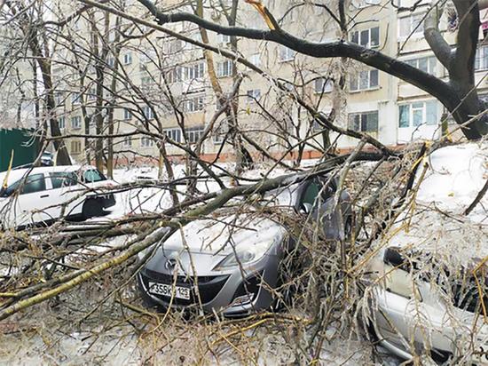 Отказавшаяся помогать жителям острова Русский после циклона чиновница лишилась должности