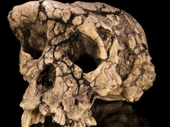 Международная группа исследователей доказала, что сахелантроп — вид приматов, который ранее считался самым древним представителем трибы гоминини, то есть предшественником человека, на самом деле не ходил прямо и не был нашим прародителем