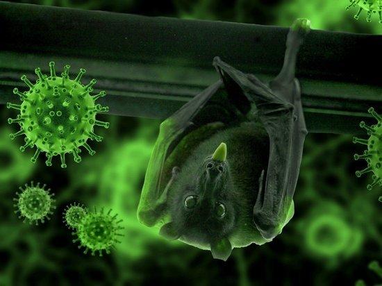 Почти 400 инфицированных коронавирусом выявили в Карелии за сутки