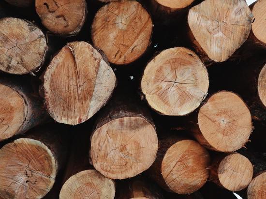 Глава лесозаготовительной фирмы ответит за взятку себежской полиции
