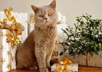Сколько новосибирцы потратят на новогодние подарки подсчитали эксперты