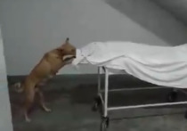 Бездомная собака обглодала труп девушки в больнице в Индии