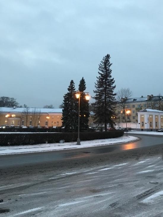 Голубые ели не выжили у Ленина в Петрозаводске