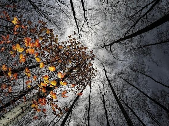 Первая неделя декабря в Ростове будет прохладной и пасмурной
