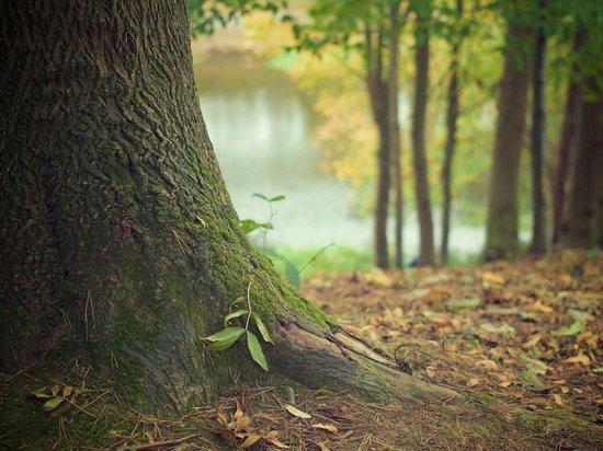 Кировские полицейские задержали двух братьев, организовавших незаконную масштабную вырубку леса в Оричевском и Слободском районах