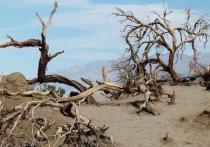За минувшие 260 лет в Центральной Азии значительно усугубились масштабы тепловых аномалий