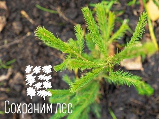 Крым завершил Всероссийскую лесную эстафету 8 тысячами новых деревьев