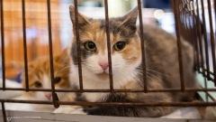 Два в одном: выставка-раздача кошек прошла в Петрозаводске
