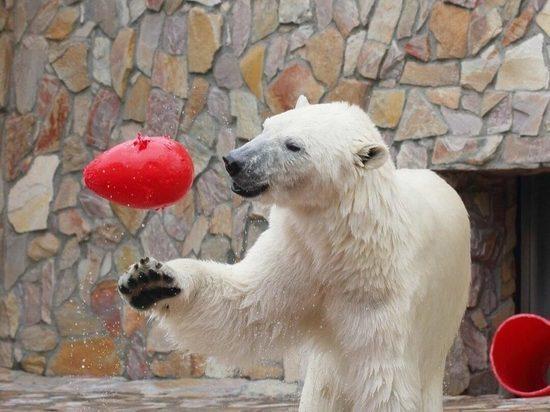 Белая медведица  Хаарчаана из Якутии отметила свой день рождения