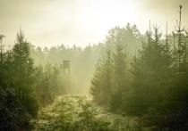 Дважды судимый нелегал пробрался в Псковскую область