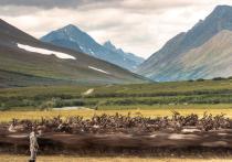Олени, пейзажи, семьи: в ЯНАО назвали победителей масштабного фотоконкурса «Северяне»