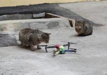Француз завещал котам Эрмитажа «небольшую сумму»
