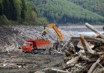 В Хакасии начали применять в строительстве топляк Саяно-Шушенского водохранилища