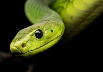 В Одессе  предлагают подружиться со змеями… бесплатно