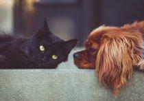В Германии коронавирус выявлен у домашних животных