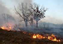 Ужесточить наказание виновников лесных пожаров планирует МЧС