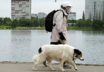Многие россияне рискуют остаться без пенсий из-за новой идеи по реформированию пенсионной системы, предложенной экспертами РАНХиГС