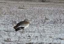Житель Ширинского района сфотографировал редкую для Хакасии птицу