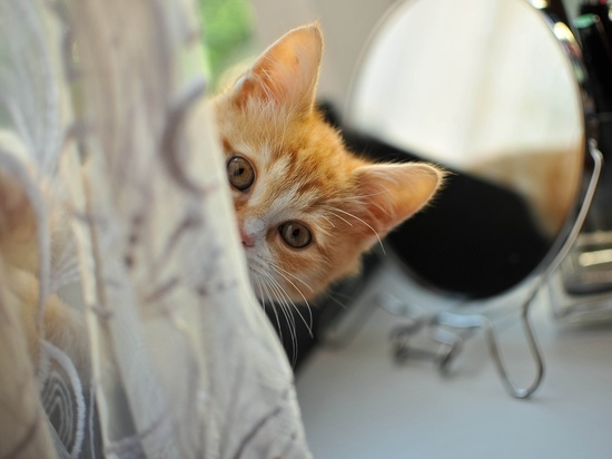 ТОП-7 ошибок хозяев кошек