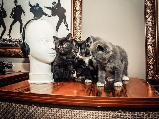 Музейный кот Архип отметил свой первый день рождения