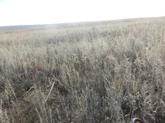 В Переволоцком районе плодородные земли заросли сорняками
