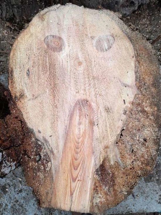 Дровосеки обнаружили на спиле дерева лицо с картины Мунка