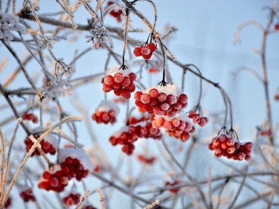 Морозно и ясно будет в Удмуртии до конца недели